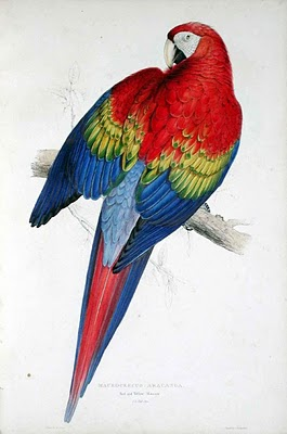 Illustration by Edward Lear